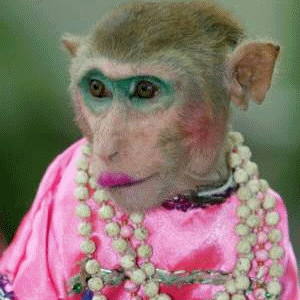 Funny Monkey Pictures #1
